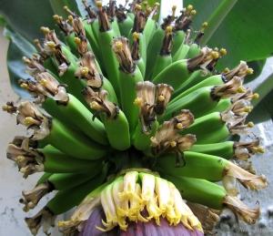 Outros/Apenas bananas....