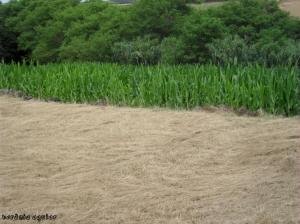 Paisagem Natural/Campo