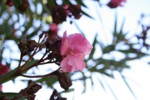 Paisagem Natural/A flor