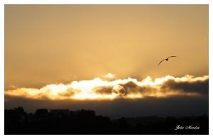 Paisagem Natural/Gaivota ao pôr-do-sol