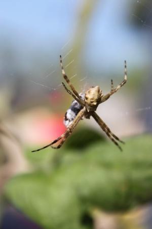 Outros/Aranha