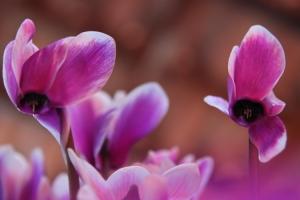 Outros/Flor I