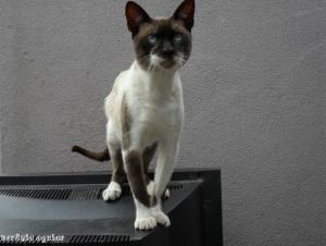Animais/Gato 2