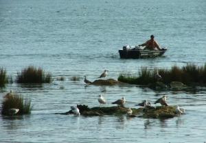 Paisagem Natural/Pescador e as Gaivotas