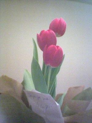 /Três tulipas para um neto