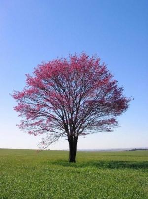 /21 de setembro, Dia da Árvore no Brasil