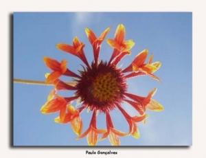 /Uma pequena flor