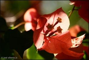 /Flower
