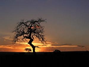 /Árvore do cerrado