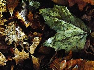 /«Outono #01»