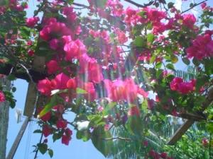 Outros/Luz sobre flores
