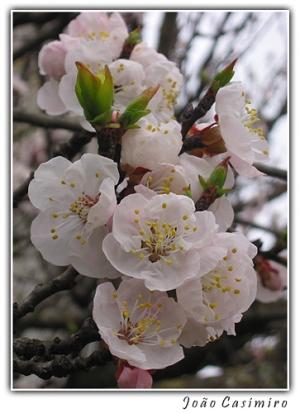 /Primavera em Flor