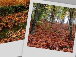 /Outono...