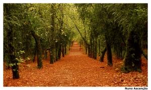 Paisagem Natural/Caminho de Outono