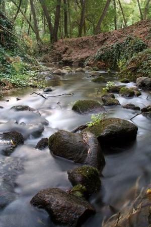 Paisagem Natural/Natureza em Estado Puro...