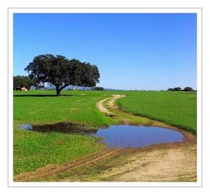 """Paisagem Natural/""""Campo verde..."""""""