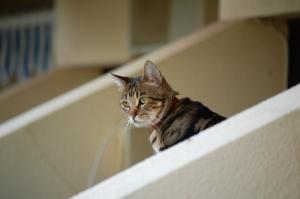 Outros/Gato de férias