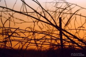 Outros/dia 124, ramos