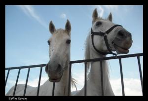 Animais/Branca e Clara