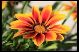 Macro/Fire Flower