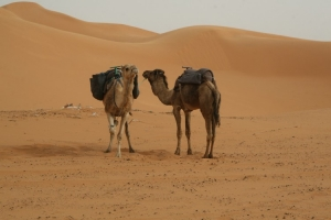 Outros/Camelos