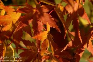 Outros/o outono é fogo ao sol