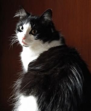 Animais/Cats