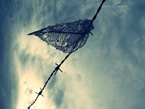 Outros/Até que um vento mais forte traga-me liberdade...