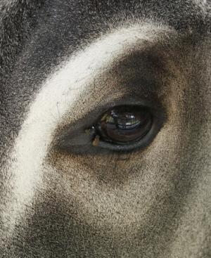 Animais/Pintura Animal