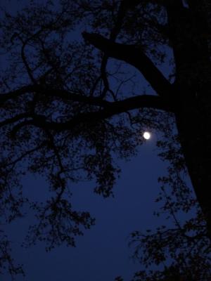 Paisagem Natural/Moon Light