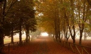 Paisagem Natural/Mist ...