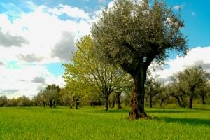 Paisagem Natural/Olive