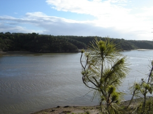 Paisagem Natural/Rio Mira (V. N. Milfontes)