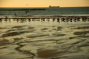 /UTENTES do mar DESCONTENTES c/ petroleiro a passar