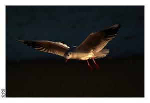 /Adorava poder voar como tu.........