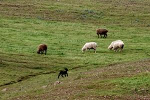 Outros/A ovelha negra