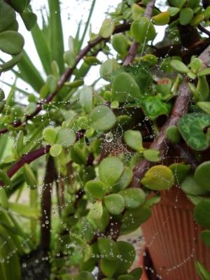 Macro/Rainy spider web