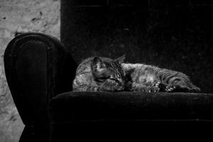 Animais/O Descanso do Guerreiro