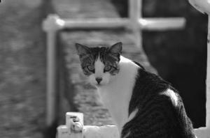 Outros/gato a B&W