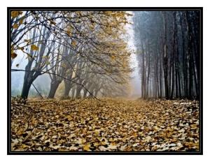 Paisagem Natural/-Luz que vem na tua cor...-