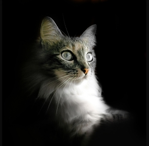 /~~ À noite todos os gatos são pardos ~~