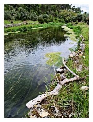 Paisagem Natural/envelhecer junto as aguas...