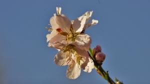 Outros/Flor de Amendoeira