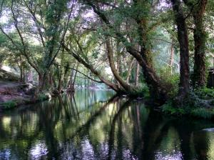 Paisagem Natural/Reflexos no rio