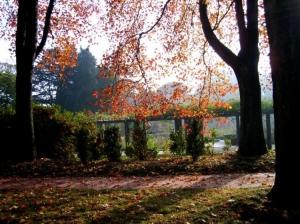 Paisagem Natural/Jardim de Serralves, Porto