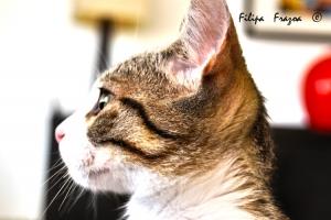 Animais/Cat II