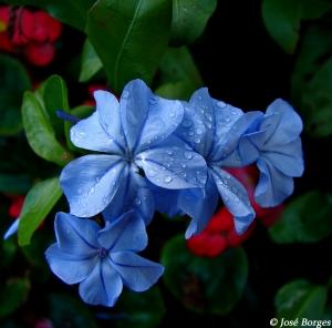 /Blue beauty...