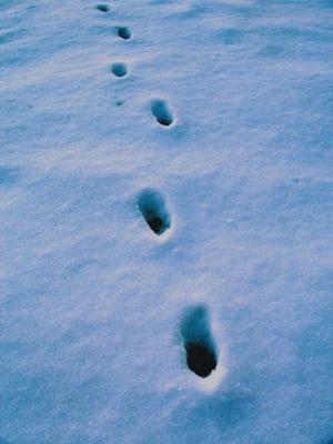 Paisagem Natural/passos no desconhecido