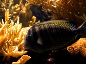 Animais/beijinho no coral