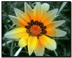 /... minha flor para todos ...